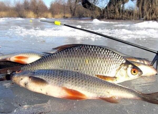 С 15 марта в Ростовской области вступает в силу заперт на вылов тарани и плотвы