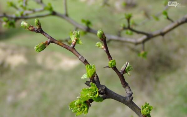 В первые дни апреля в Ростовской области потеплеет до +18 °С