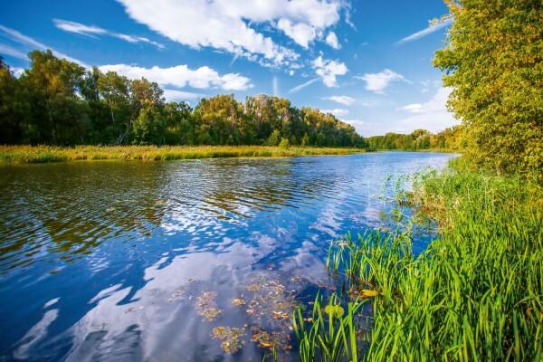 Для оздоровления реки Дон Ростовская область предложила 239 мероприятий