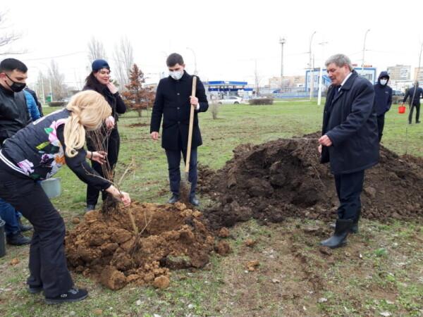 Комфорт в Волгодонске зависит от каждого: в День древонасаждений в городе высадили больше пяти с половиной тысяч деревьев и кустарников