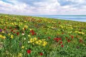 В долине Западного Маныча состоится IX фестиваль экологического туризма «Воспетая степь»