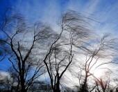 В Ростовской области ветер усилится до 18 метров в секунду