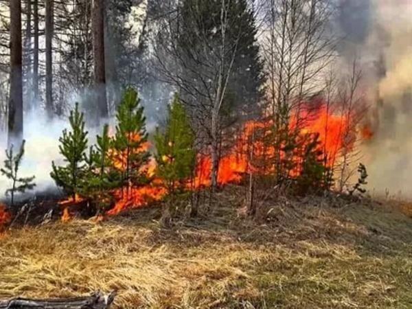 Осужден угонщик машины, по вине которого в Цимлянском районе сгорел лес