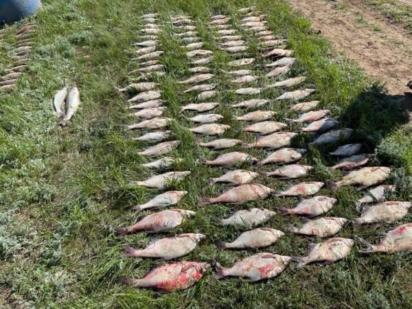 В Ростовской области браконьеры наловили рыбы на 200 тысяч рублей