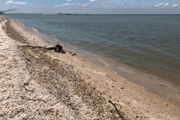 Продолжается расследование по факту гибели рыбы в Цимлянском водохранилище