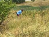 Во время рейда по борьбе с дикорастущей коноплей уничтожено 500 кг опасного растения