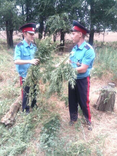 В Волгодонске провели очередной рейд по борьбе с дикорастущей коноплей
