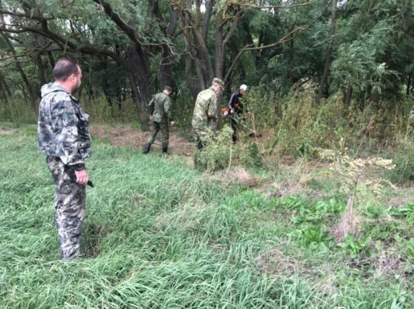 За лето в Волгодонске уничтожено более тонны конопли