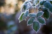 В МЧС предупредили о заморозках до — 1 градуса в Ростовской области
