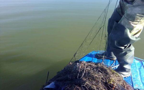При очистке Цимлянского водохранилища от брошенных сетей спасено более 170 рыб